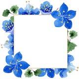 Blue phacelia flower. Green leaf wildflower. Watercolor background illustration set. Frame floral square. Blue phacelia. Floral botanical flower. Green leaf royalty free illustration