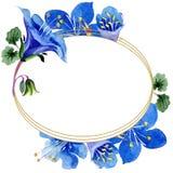 Blue phacelia flower. Green leaf wildflower. Watercolor background illustration set. Frame floral round. Blue phacelia. Floral botanical flower. Green leaf vector illustration