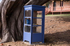 Blue phone box with old tree in Tasmania, Australia Royalty Free Stock Photos