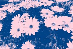 Blue Photo of Petaled Flowers Royalty Free Stock Photography