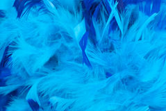Blue pigeon feather boa trim Stock Photo