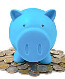 Blue piggy bank with coins Stock Image