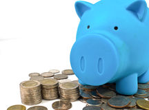 Blue piggy bank with coins Royalty Free Stock Photo