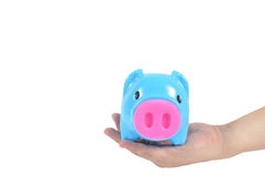 Blue piggy bank in man hand on white background, clippi Royalty Free Stock Photography