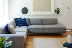 Blue pillows on grey corner sofa in apartment interior with lamp and plant next to poster. Real photo royalty free stock photo