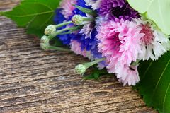 Blue and pink cornflowers royalty free stock image
