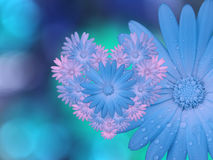 Blue-pink  flowers,  on blue-turquoise blurred background .  Closeup.  Bright floral composition, card for the holiday.  collage o Stock Photography