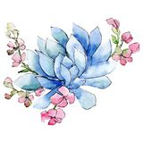 Blue and pink flowers. Isolated flower illustration element. Background set. Watercolour drawing aquarelle bouquet. Blue and pink flowers. Floral botanical royalty free illustration