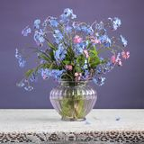 Forget-me-nots Myosotis in a vase on purple background. Blue and pink forget-me-nots Myosotis. Small bouquet of flowers in a glass vase on a purple background Royalty Free Stock Photography