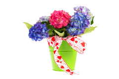 Blue and pink Hydrangea bouquet Royalty Free Stock Photo