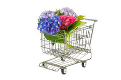 Blue and pink Hydrangea in shopping cart Royalty Free Stock Image