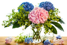 Blue and pink hydrangea Royalty Free Stock Image