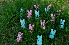 Blue and pink marshmallow bunnies in green grass Stock Photos