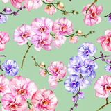 Blue and pink orchid flowers on light green background. Seamless floral pattern. Watercolor painting. Blue and pink orchid flowers on light green background Royalty Free Stock Images