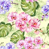 Blue and pink orchid flowers with outlines and large green monstera leaves on light green background. Seamless pattern. Watercolor painting. Hand drawn Royalty Free Stock Photos