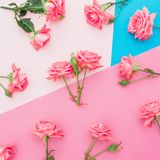 Blue and pink pastel background with roses flowers. Flat lay. Top view. Blue and pink pastel background with roses flowers. Flat lay royalty free stock image