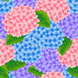 Blue, Pink and Purple Hydrangea Flower Seamless Background. Vector Illustration Stock Images