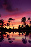 Blue pink and red sunset over sea beach with palms Stock Image