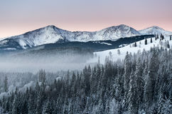 Blue and pink sky in the winter Royalty Free Stock Photo