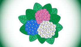 Blue, pink and white hydrangeas vector illustration