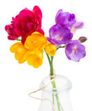 Blue, pink and yellow freesia  flowers Royalty Free Stock Images