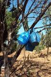 Blue pitchers hanged on tree branch Royalty Free Stock Photo