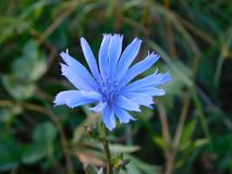 Blue, Plant, Flora, Flower royalty free stock photos
