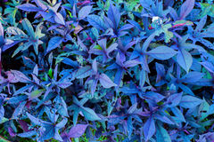 Blue plant in a green park stock photography