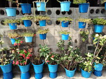 Blue plant pots Stock Images