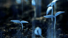 Blue plants growing, futuristic planet, new life germination, growth modern concept. Video stock video footage