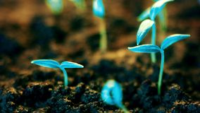 Blue plants growing, futuristic planet, new life germination, growth modern concept. Video stock video