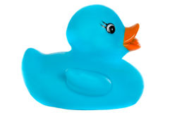 Blue plastic duck Royalty Free Stock Photography