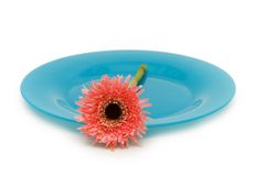 Blue plate with flower isolated on the white. Blue plate with  flower isolated on the white Royalty Free Stock Photography