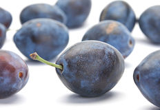 Blue plum Stock Images
