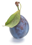 Blue plum Stock Image
