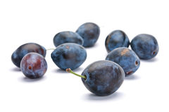 Blue plum Stock Photography