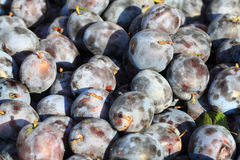 Blue plum fruits Stock Photo