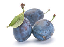 Blue plum with leaf Stock Photos