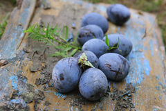 Blue Plum in the old garden. September Royalty Free Stock Image