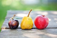 Blue plum red apple yellow pear on wooden table. Natural organic fruits harvest still life photo. Shallow depth of field.  Stock Photo