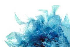 Blue plumage Stock Photo