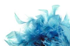 Blue plumage. Light blue plumage on white background Stock Photo