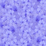 Blue plumbago flower background Stock Image