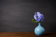 Blue plumbago flowers in vase. Cape Leadwort or Plumbago auriculata on wooden table Stock Photos