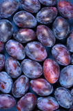 Blue plums background Stock Photo