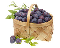Blue plums in a wicker  basket Stock Images