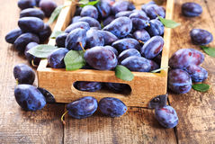 Blue plums Royalty Free Stock Image
