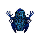 Blue Poison Dart Frog. 3D render of a blue poison dart frog Royalty Free Stock Photos