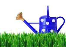 Blue polka dot watering can on green grass isolated on white Royalty Free Stock Images