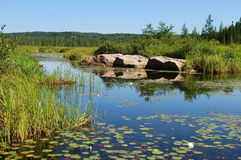 Blue Pond. Blue water pond with white lilies, Algonquin Provincial Park, Ontario, Canada Stock Image